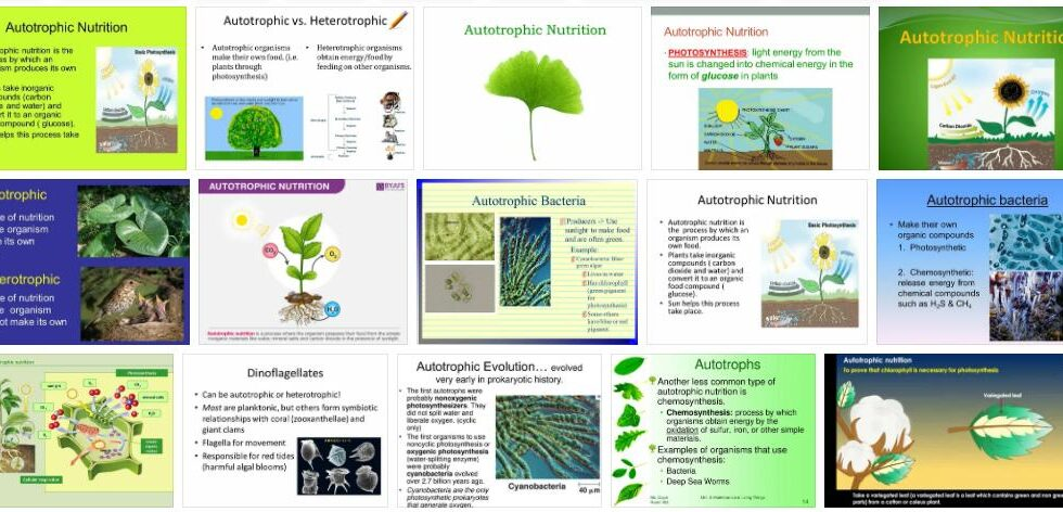 Autotrophic